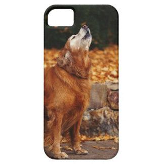 道で遠ぼえしているゴールデン・リトリーバー犬 iPhone SE/5/5s ケース