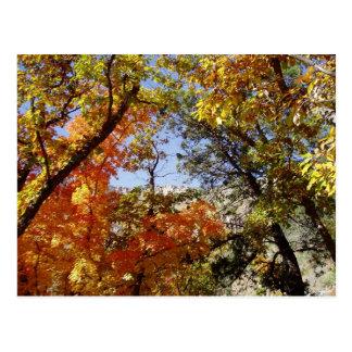道に沿って-木およびリッジ ポストカード
