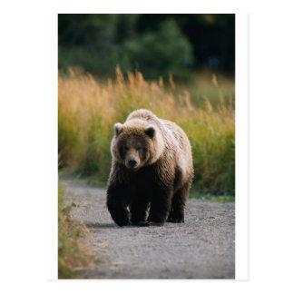 道のヒグマの歩く ポストカード