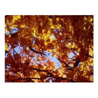 道-日曜日のかえでの葉に沿って ポストカード