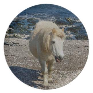 遠隔ビーチの南デボンシェトランド諸島の子馬の歩く プレート