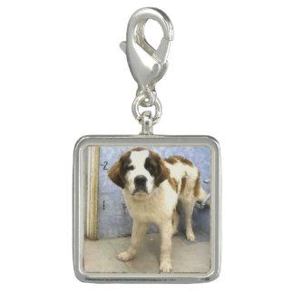 避難所のチャームの聖者の子犬 チャーム