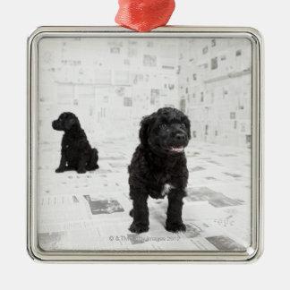 部屋の2匹のポルトガル水犬の子犬 シルバーカラー正方形オーナメント