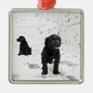部屋の2匹のポルトガル水犬の子犬 メタルオーナメント