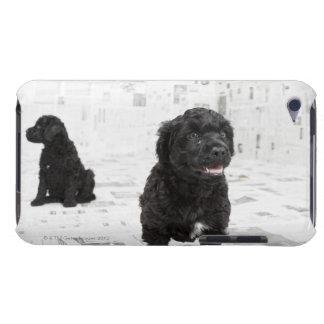 部屋の2匹のポルトガル水犬の子犬 Case-Mate iPod TOUCH ケース