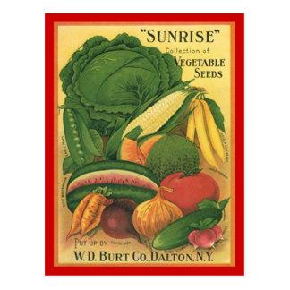 郵便はがきのヴィンテージの旧式なBurt Coの野菜の種 ポストカード