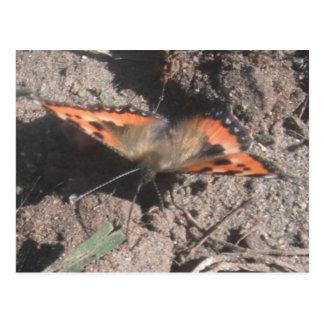 郵便はがきの毛深い蝶土のあさること ポストカード