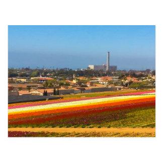 郵便はがきの花分野カールズバッド、カリフォルニア ポストカード
