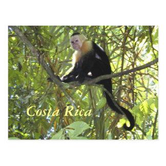 郵便はがきのCapuchin猿コスタリカ ポストカード