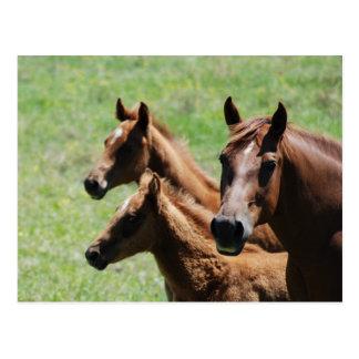 郵便はがき-クリのロバ及び子馬 ポストカード