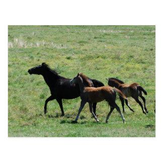 郵便はがき-ロバ及び子馬の走ること ポストカード