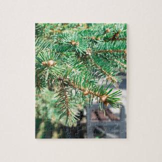 都市通りの針葉樹の枝 ジグソーパズル