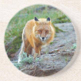 野生のアカギツネの口やかましい女の野性生物の写真の芸術 コースター