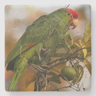 野生のアマゾンオウムの鳥動物の野性生物 ストーンコースター