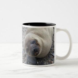 野生のアラスカのシール ツートーンマグカップ