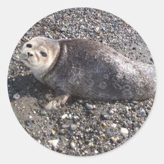野生のアラスカのシール ラウンドシール