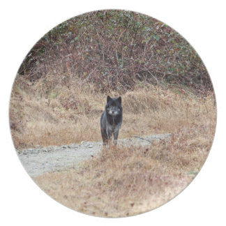 野生のオオカミの写真 プレート