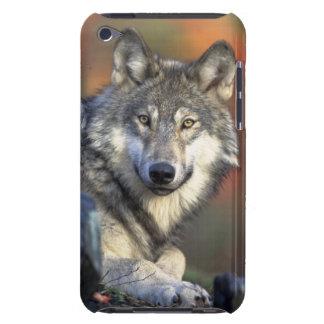 野生のオオカミ Case-Mate iPod TOUCH ケース