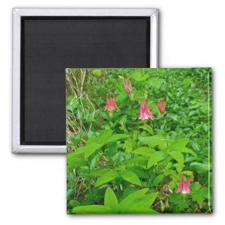 野生のオダマキ(植物)及びSolomonのシールの磁石 マグネット