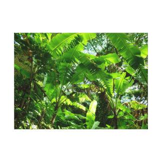 野生のバナナ植物 キャンバスプリント