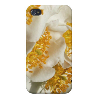 野生のバラ iPhone 4/4Sケース