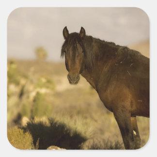 野生のムスタングの種馬、冷たいホイーラー山の群れ スクエアシール