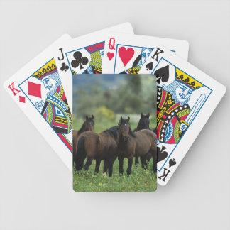 野生のムスタングの馬3 バイスクルトランプ