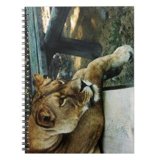 野生のライオンの動物のジャングルの女王の螺線形ノート ノートブック