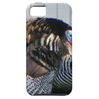 野生の七面鳥 iPhone SE/5/5s ケース