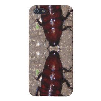野生の優美の料理-科学、自然nの昆虫 iPhone SE/5/5sケース