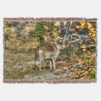 野生の単独オオカミ スローブランケット