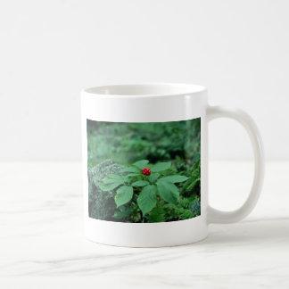 野生の朝鮮人参(Panax Quinquefolius)の花 コーヒーマグカップ