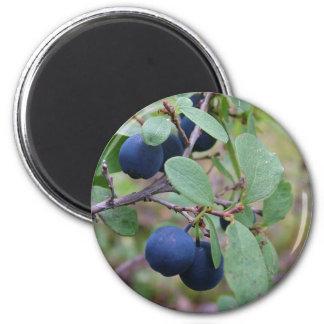 野生の果実の磁石 マグネット