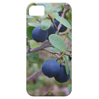野生の果実のiPhone 5の穹窖 iPhone SE/5/5s ケース