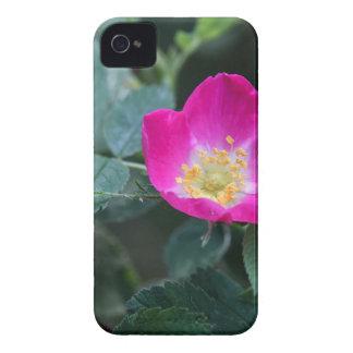 野生の柔らかい綿毛のようのの花は上がりました Case-Mate iPhone 4 ケース