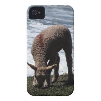 野生の海岸線のデボンの南子ヒツジGrazeing Case-Mate iPhone 4 ケース