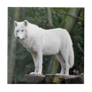 野生の白いオオカミ タイル