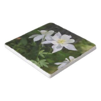 野生の白いオダマキ(植物) トリベット