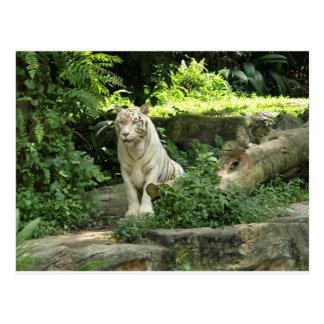 野生の白いトラを救って下さい ポストカード