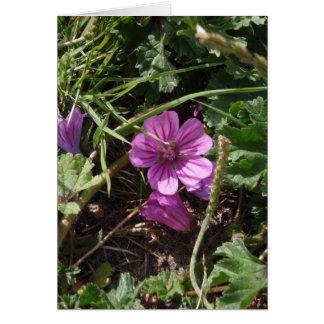 野生の紫色のCranesbill カード