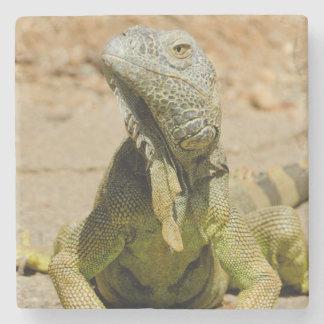 野生の緑のイグアナ ストーンコースター