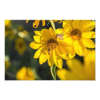 野生の花および蜂 フォトプリント
