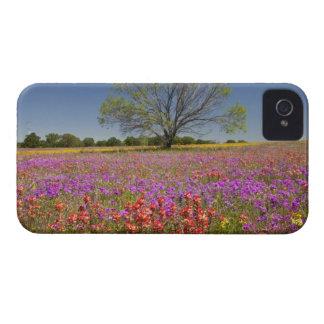 野生の花で育つ春のmesquiteの木 Case-Mate iPhone 4 ケース