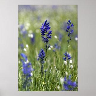 野生の花の山草原を含む ポスター