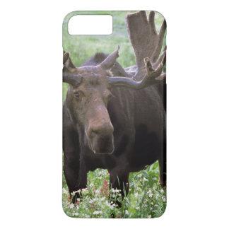 野生の花のBullのアメリカヘラジカのAlcesのalces)、 iPhone 8 Plus/7 Plusケース