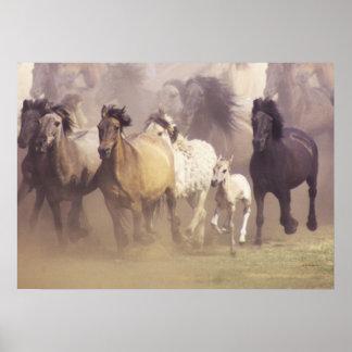 野生の馬の走ること ポスター