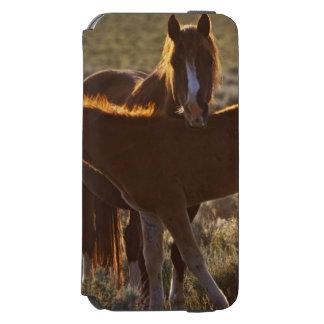 野生の馬のEquusのcaballusの)大人および子馬 Incipio Watson™ iPhone 6 ウォレットケース