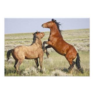 野生の馬のEquusのcaballusの)野生の馬2 フォトプリント