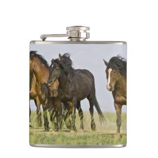 野生の馬のEquusのcaballusの)野生の馬3 フラスク