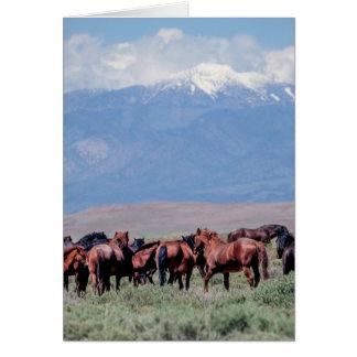 野生の馬は西に消します カード
